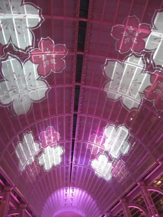 天井までピンクの桜