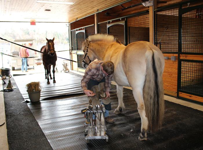 サラマンダーリゾートで馬の世話をしている様子