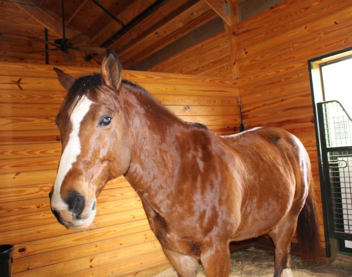 サラマンダーリゾートの馬!