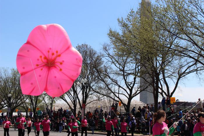 桜のバルーン